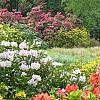 Blackhills Garden