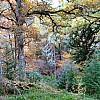 Cawdor Wood